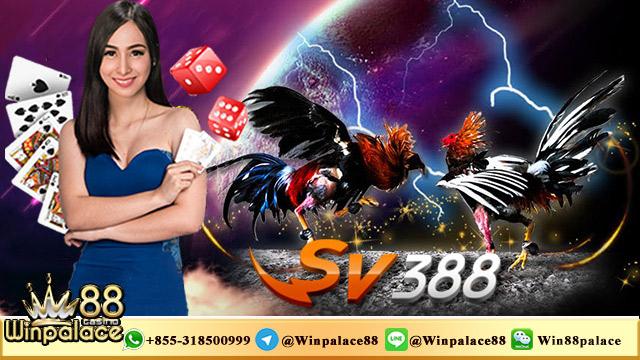 Withdraw Sabung Ayam SV388 | Agen SV388